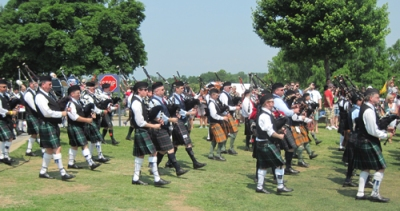pipers gallabrae
