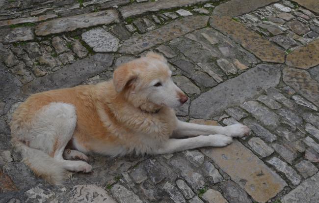 erice_dog