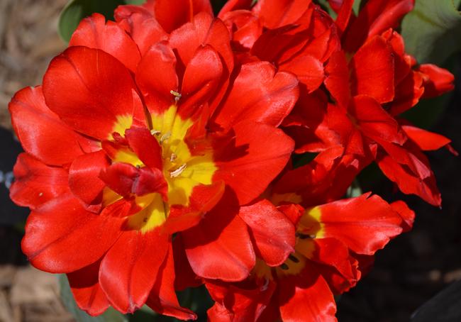 flowerelisabeth