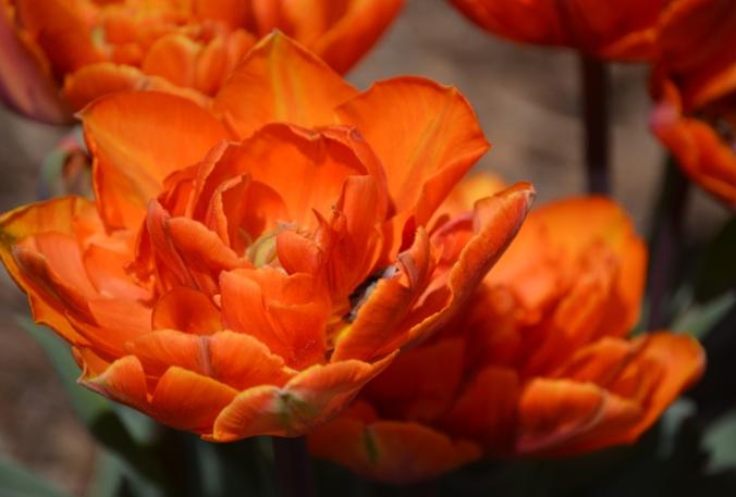 flowerorange