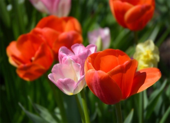 flowerorangepink