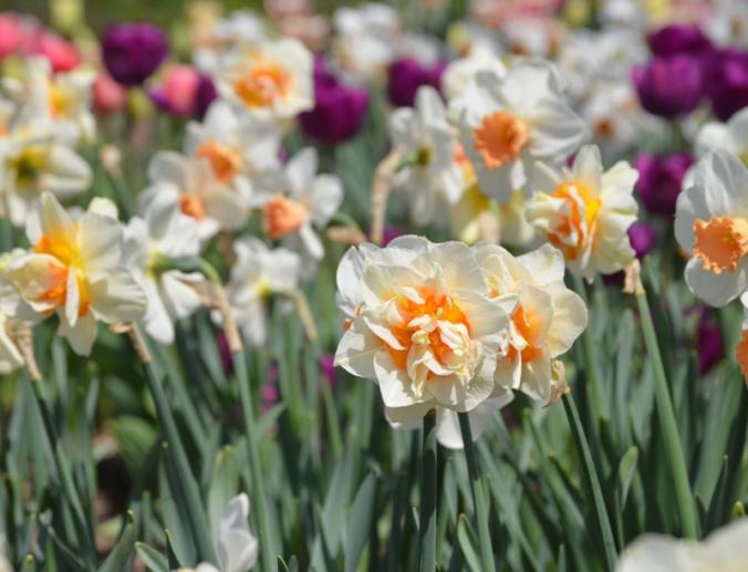 flowerparade