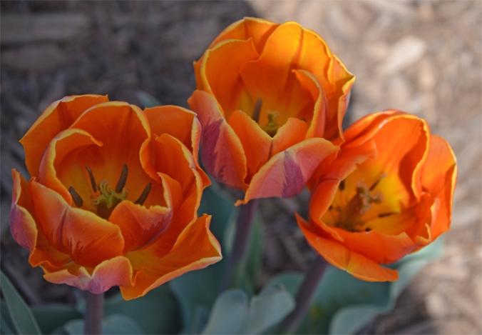 flowerprincessirene
