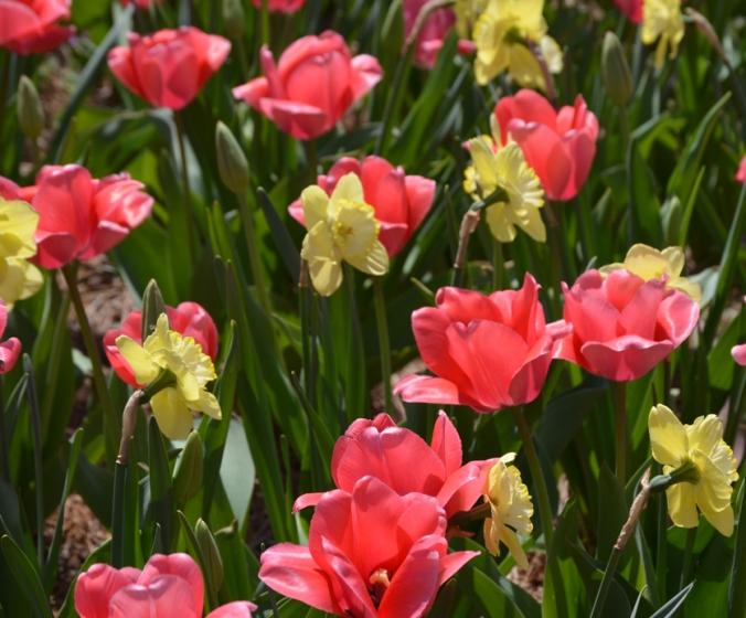 flowerprinkdaf