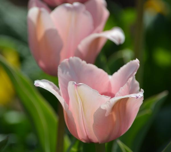 flowersdelicatepink