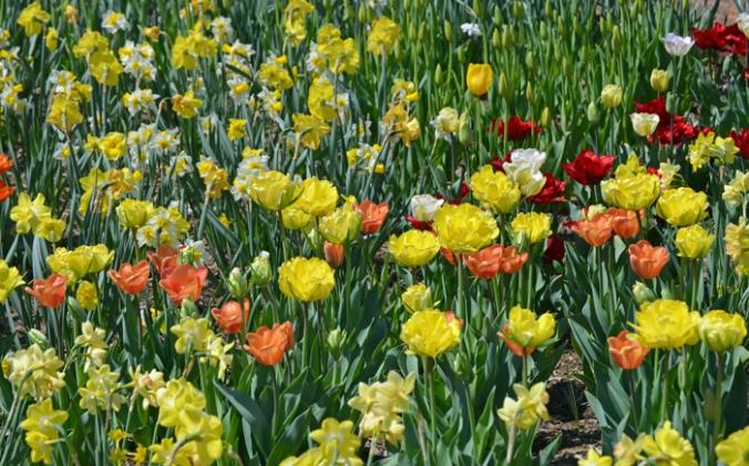 flowersmultiple
