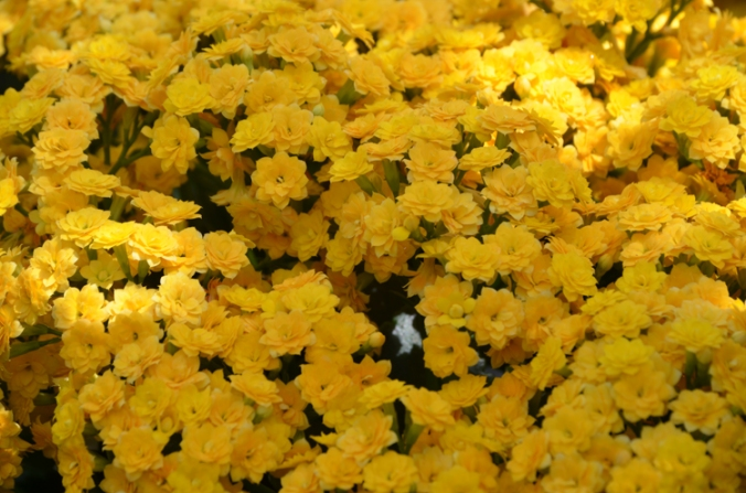 flowersunnyblooms