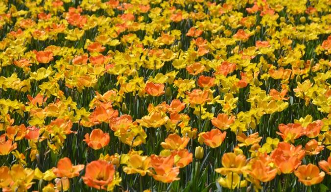 flowersunshine