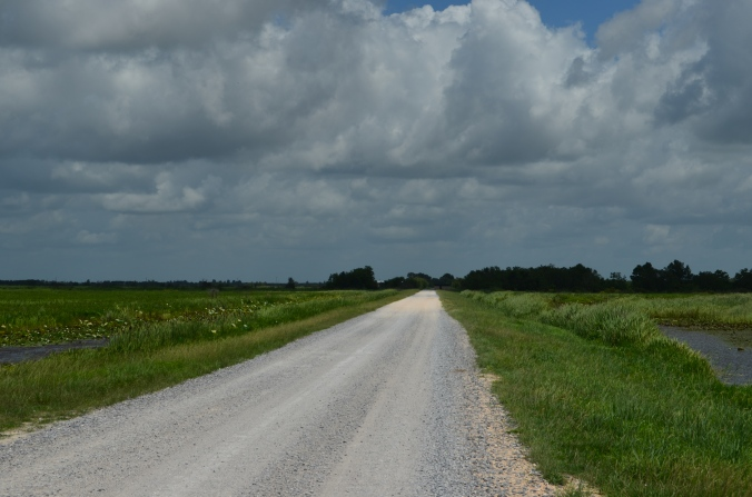 gravel road in Lacassine
